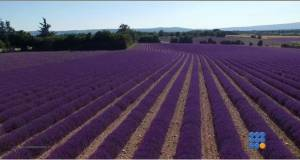 WebBuzz du 14/08/2015: Sud de la france: le temps de la lavande-South of france Time of lavanda