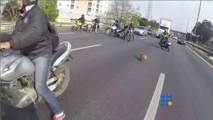 WebBuzz du 23/03/2016: Des motards sauvent un chien en bloquant une autoroute-Bikers Save Dog on busy highway