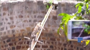 WebBuzz du 05/07/2017: Inde: un léopard tombé dans un puit secouru par les habitants-India leopard that fell into a well rescued by local people