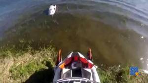 WebBuzz du 24/06/2015: Un russe tente de faire du jetski avec une motoneige-Russian tries to jetski with snowmobile