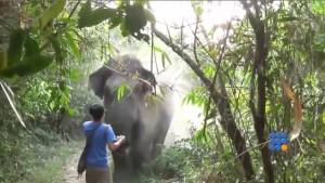 WebBuzz du 12/06/2014 : Un éléphant fonce sur un touriste - An elephant rushes on a tourist