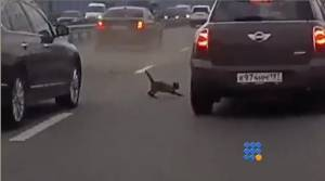 WebBuzz du 11/07/2014: Un chaton joue sur l'autoroute-A kitten play on the highway