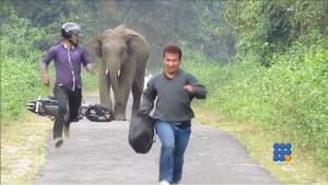 WebBuzz du 04/11/2014: Un éléphant en colère sur la route-Angry elephant on the road