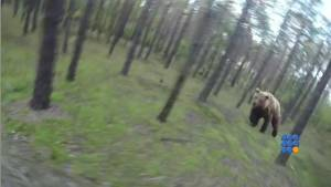 WebBuzz du 03/12/2014 : Un ours attaque un cycliste-A Bear attacks a rider