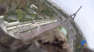 WebBuzz du 29/10/2014: Vol d'un aigle de la tour eiffel au champs de mars-Eagle s fly from eiffel tower to champs de mars