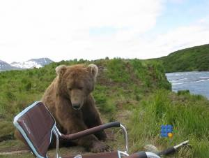WebBuzz du 30/01/2015: Un grizzli s'assoit à coté d'un photographe-a grizzli bear sits next to a guy