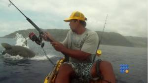 WebBuzz du 01/08/2014: Un requin attaque un pecheur-Ashark attack a fisherman