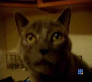 WebBuzz du 18/02/2015: Comment un chat fait-il pour se moucher-How cat did he do to blow his nose