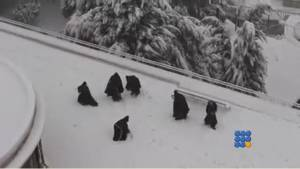 WebBuzz du 26/02/2015: Jerusalem: des moines font une bataille de neige-Jerusalem monks in snow ball fight