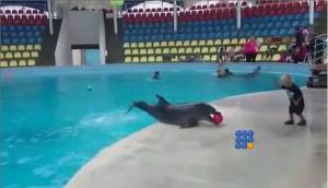 WebBuzz du 01/10/2014 : Un dauphin joue avec un enfant-A dolphin plays with a kid